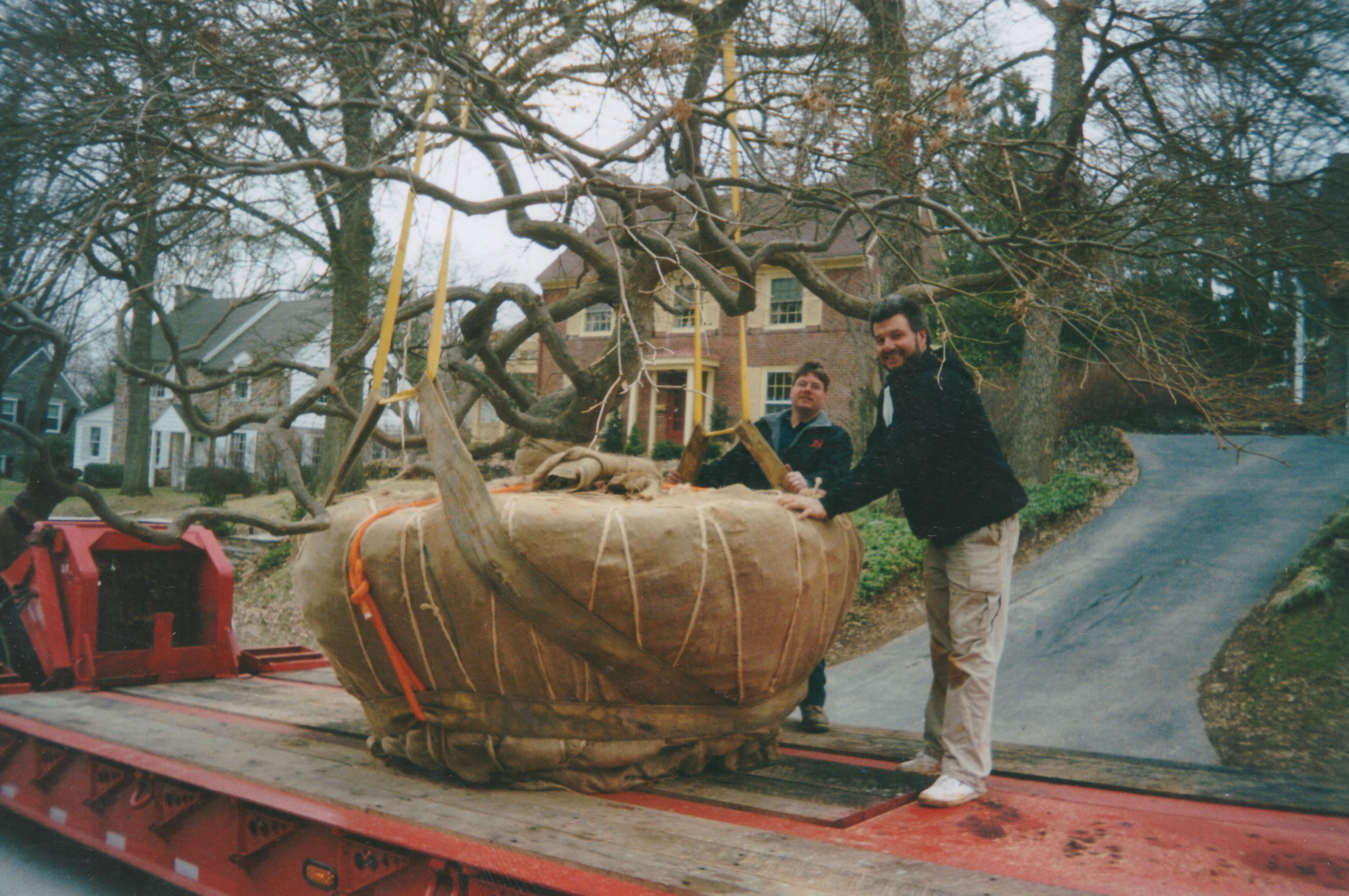 Organixx Big Large Tree Removal